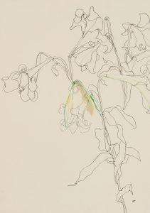 Lilies (Outlines – Blue & Black), 2000's