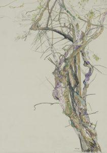 Bougainvillea (Mum's Garden), 2000's