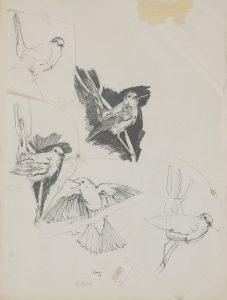 Nightingales, c. 1978